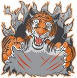 De Tiger Mascot Ripping fondo hacia fuera y plantilla del vector que agarra Foto de archivo