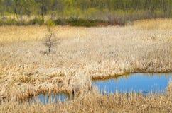 De tijd nat land van de lente Stock Foto's