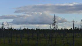 De tijd-tijdspanne van zich het vormen en het vliegen betrekt over het dode hout in Siberië, Yamal, Rusland stock video