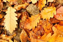 De tijd van de herfst Royalty-vrije Stock Foto