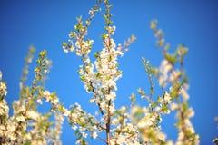 De tijd van de lente Stock Fotografie