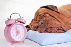 De Tijd van de ochtend royalty-vrije stock foto's