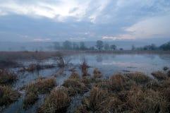 De tijd van de ochtend op moerasgebied Stock Foto