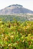 De tijd van de oogst Rijpe appel ter plaatse in een tuin van de appelboom stock afbeelding