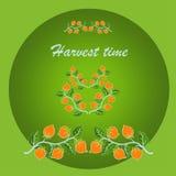 De tijd van de oogst Rijpe appel ter plaatse in een tuin van de appelboom Royalty-vrije Stock Afbeelding