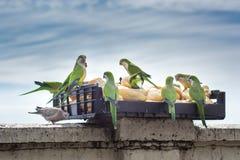 De tijd van de papegaaienlunch Stock Foto