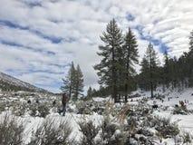 De tijd van de sneeuw Stock Afbeeldingen