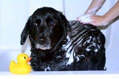 De Tijd van het bad stock fotografie