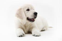 De tijd van het puppy Royalty-vrije Stock Foto's