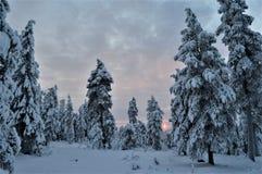 De tijd van Kerstmis Stil, koud en vreedzaam bos in Noordelijk Finland Strengheids bos, snow-covered bomen en koude zon stock afbeeldingen