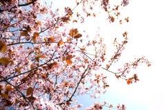 De tijdschoonheid van de lente Royalty-vrije Stock Foto
