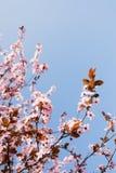 De tijdschoonheid van de lente Stock Foto's