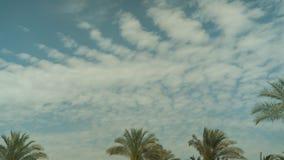 De Tijdspanne van de de Wolkentijd van de palmhemel stock footage