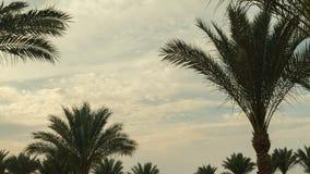 De Tijdspanne van de de Wolkentijd van de palmhemel in de ochtend stock footage