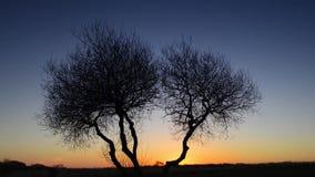 De Tijdspanne van de zonsopgangtijd stock video