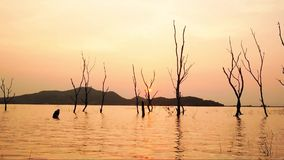 De Tijdspannesilhouet van de gezoem uit Tijd van Droge boom in water bij het Reservoir van Klapphra in zonsondergang, Sriracha-Di stock videobeelden