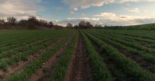 De de tijdspannezon van de landbouwtijd steekt overvloedige oogst, irrigatiesysteem aan, doorploegt gecultiveerd gebiedslandschap stock footage
