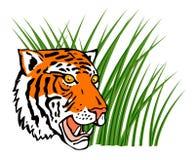 De tijger in het gras snuffelt rond Royalty-vrije Stock Afbeeldingen