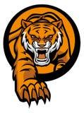 De tijgermascotte komt uit uit cirkel Royalty-vrije Stock Foto's