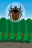 De tikken zijn vectoren van Lyme-borreliosis en tick-borne encephaliti Royalty-vrije Stock Foto