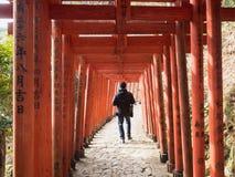 De toerist in rode torii stock fotografie