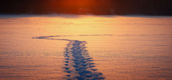 De toerist van de de wintersleep op een snow-covered gebied stock fotografie