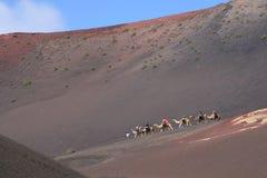 De toeristen berijden kamelen in de woestijn, Lanzarote, Spanje Royalty-vrije Stock Foto's