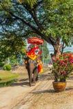 De toeristen berijden op een olifant Stock Foto's