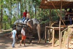 De toeristen berijden op olifanten in de wildernis Stock Foto's