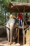 De toeristen berijden op olifanten in de wildernis Royalty-vrije Stock Afbeeldingen