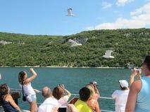 De toeristen die op de veerboot aan voerzeemeeuwen varen en nemen beelden Kroatië, Istra - Juli 20, 2010 stock afbeelding
