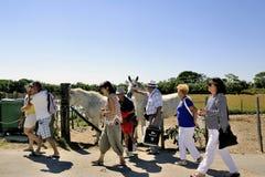 De toeristen gaan na hun bezoek weg aan de Camargue-paarden Royalty-vrije Stock Afbeeldingen