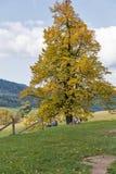 De toeristen hebben een rust in Calvary Banska Stiavnica, Slowakije Stock Afbeeldingen