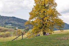 De toeristen hebben een rust in Calvary Banska Stiavnica, Slowakije Royalty-vrije Stock Afbeelding