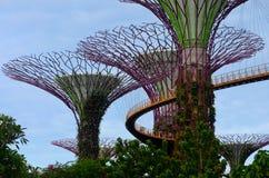 De toeristen lopen op OCBC Skywalk tussen Supertrees bij Tuinen door de Baai Singapore Stock Foto's