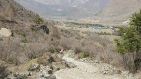 De toeristen met de gids zijn op de trekking in Himalayagebergte, Manaslu-gebied, Nepal stock videobeelden