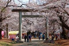 De toeristen nemen aan Sakura Matsuri deel om trillende kersenbloesems te bewonderen van het bloeien van Sakura-bomen royalty-vrije stock fotografie