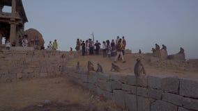 De toeristen ontmoeten de zonsondergang met apen stock video