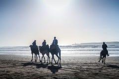 De toeristen op kameel berijden op dag, tijdens de zomers, bij het strand van kustessaouira, Marokko, Noord-Afrika stock afbeeldingen
