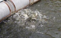 018: De toeristen voeden vissen in een vijver Stock Afbeelding
