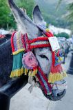 De toeristenaantrekkelijkheid van de ezel Stock Fotografie