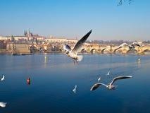 De toeristenbeeld van Praga stock afbeeldingen