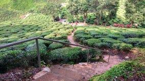 De Toeristengebied van de theeaanplanting Royalty-vrije Stock Fotografie