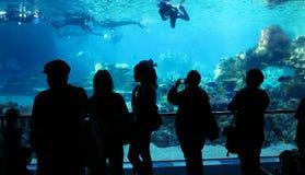 De toeschouwers van het aquarium letten op duikers Stock Fotografie