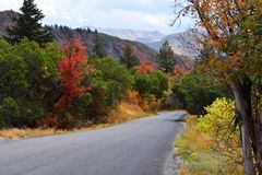 De Toevlucht van de Sundanceberg De mooie kleuren van de boomdaling stock fotografie