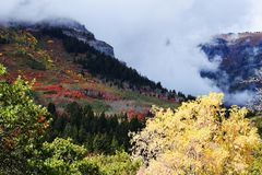 De Toevlucht van de Sundanceberg De mooie kleuren van de boomdaling royalty-vrije stock afbeeldingen