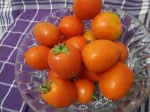 De tomaat een dag, houdt weg de arts Royalty-vrije Stock Afbeelding