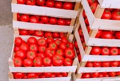 De tomaat is klaar voor vervoer - vervoer Royalty-vrije Stock Afbeelding