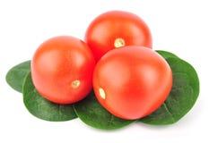 De tomaat van de kers met spinazie Royalty-vrije Stock Afbeeldingen