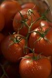 De tomaat van de tak Royalty-vrije Stock Afbeelding